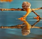 snail_tale_18