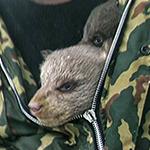 bear_cubs_sidebar.jpg_2