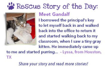 stories-cat-Nov13-Gandalf