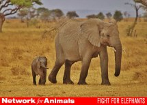 elephant_header_600_432
