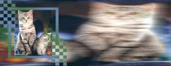 katten03111