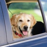 dog_car_iStock_000016700754PK-Photos