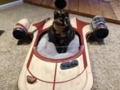 cat-320x240