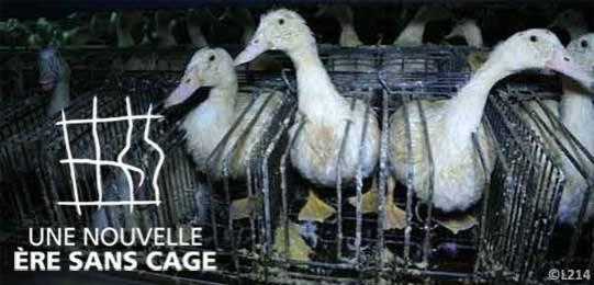 foie-gras-logo-sanscage540