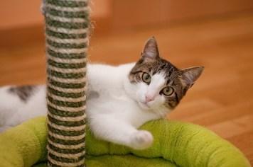 Come-evitare-che-cani-e-gatti-danneggino-i-mobili-di-casa