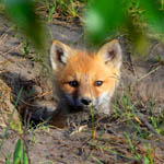 Fox_Flickr_BradSmith