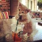micio-che-beve