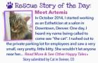 stories-Feb14-Artemis