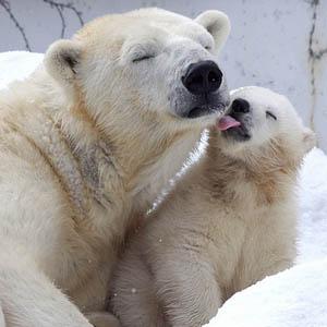PolarBearFamily_Flickr_trasroid