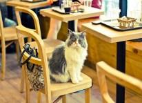 cat-cafe-italiani
