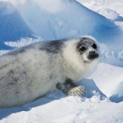 HSUS-Seals_250
