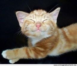 il-simpatico-gatto-che-sorride