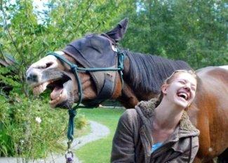 animali-che-ridono4