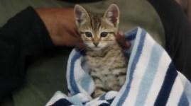 keanu-kitten-key-peele-530x297