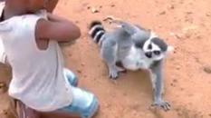 lemure-kBtD-U10701151626908o7H-428x240@LaStampa.it