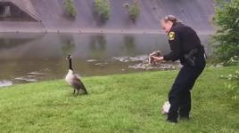 goose-asks-help-police-coverimage-5339-kWwH-U1080248730561ZKC-1024x576@LaStampa.it