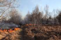 06032015 incendio parco groane foto di matteo turconi (13)