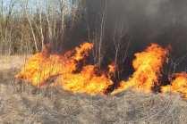 06032015 incendio parco groane foto di matteo turconi (16)