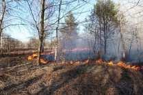 06032015 incendio parco groane foto di matteo turconi (7)
