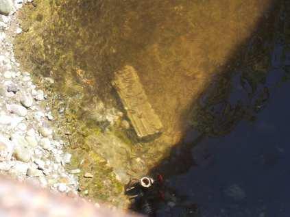 28062015 salvataggio pesci lura (13)