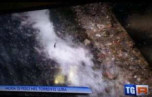 02072015 tgr moria pesci lura 3 (3)