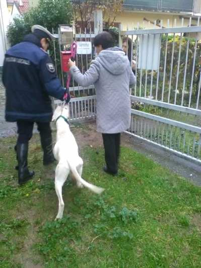 lazzate-polizia-salva-cane-3