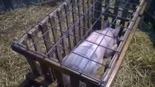 15012017 sant'antonio animalisti (2)