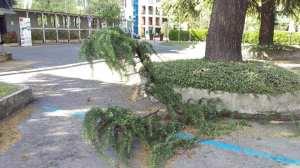 danni vento 18042017 (3)