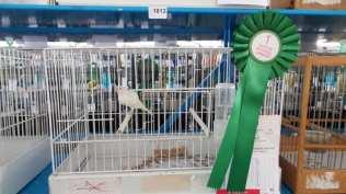20171111 competizione ornitologica regionale saronno (2)