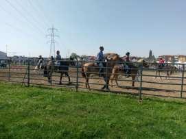 20180422 fiera del bestiame di origgio cavalli (7)
