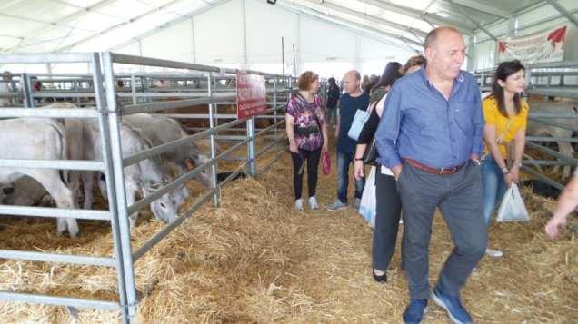 20180425 fiera del bestiame origgio bovini (4)