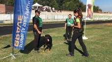 campionato alpini cani da soccorso 2018 cogliate (10)