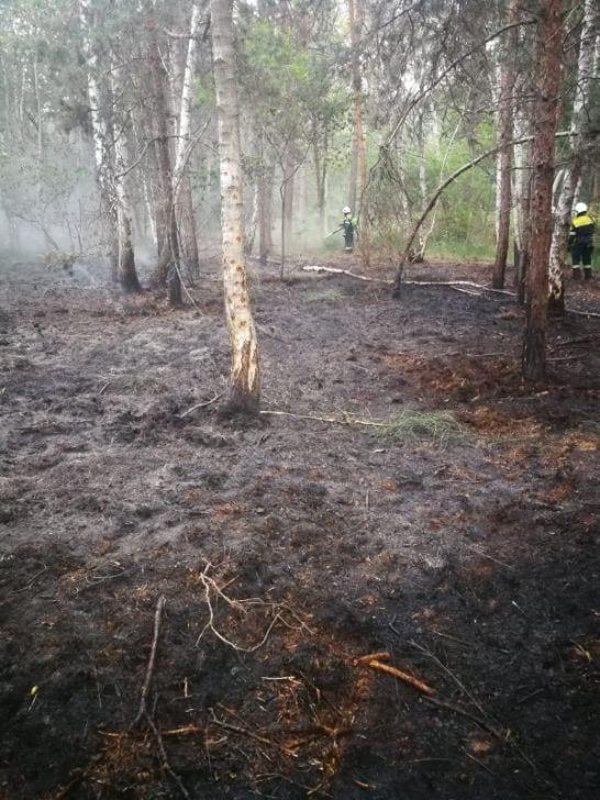 ceriano incendio bosco (8)