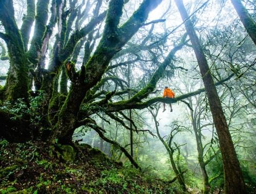 avventura, alberi, natura, paura, fallimento, novità
