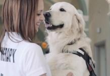 Pet Therapy contro ADHD