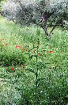 Filarmonica_Saturnia_20-5-18_06