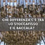 differenza tra stoccafisso e baccalà