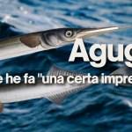 Pesce Aguglia
