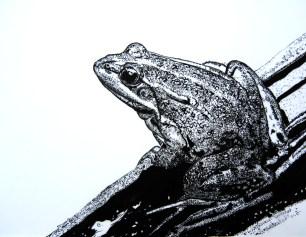Ilustração Científica | Cledna Silva