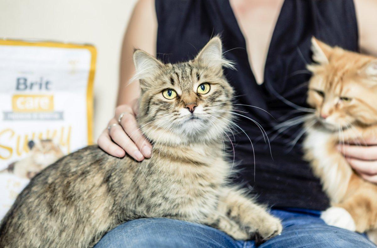 Brit Care Cat - image_2