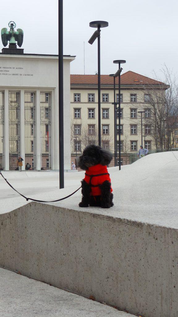 Dove andare in vacanza con il cane: Innsbruck