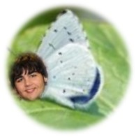 1a - igna butterfly