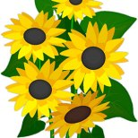 9-sunflowers-2