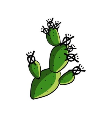 Color illustration of a prickly pear