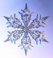 snowflak3