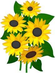 9-sunflowers-2