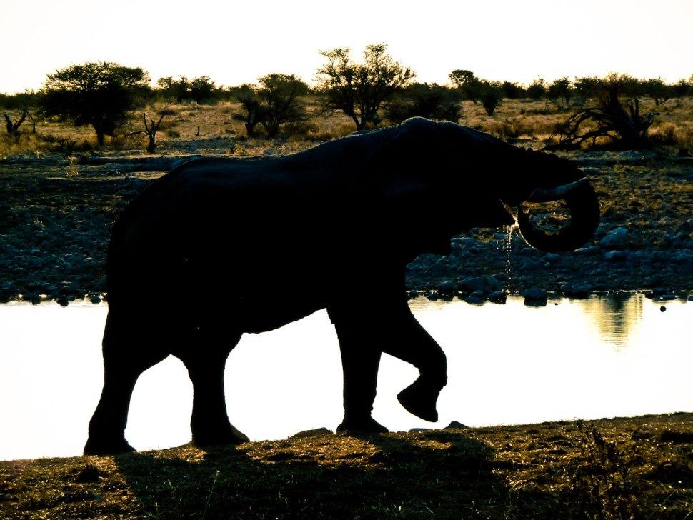 Nambia-1050624