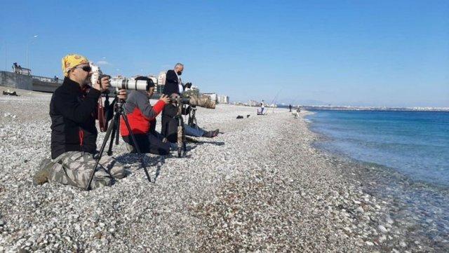 TARAKDİŞ  Son dakika: Doğa harikaları sahile akın etti