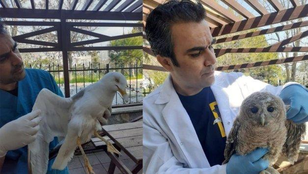 Nesli tehlike altındaki ulu doğan kuşu ile şahin yaralı bulundu