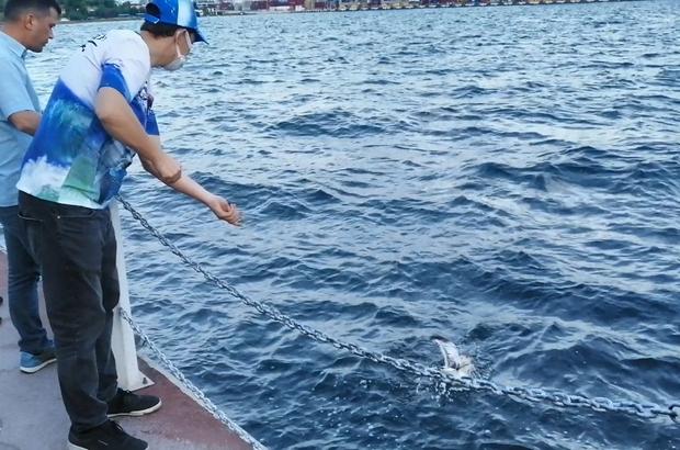 Balık tutmak için attığı oltasına takılanı görünce şaşırdı Büyük av umuduyla çektiği oltasından martı çıktı Oltaya takılan martıyı kurtararak doğaya saldı